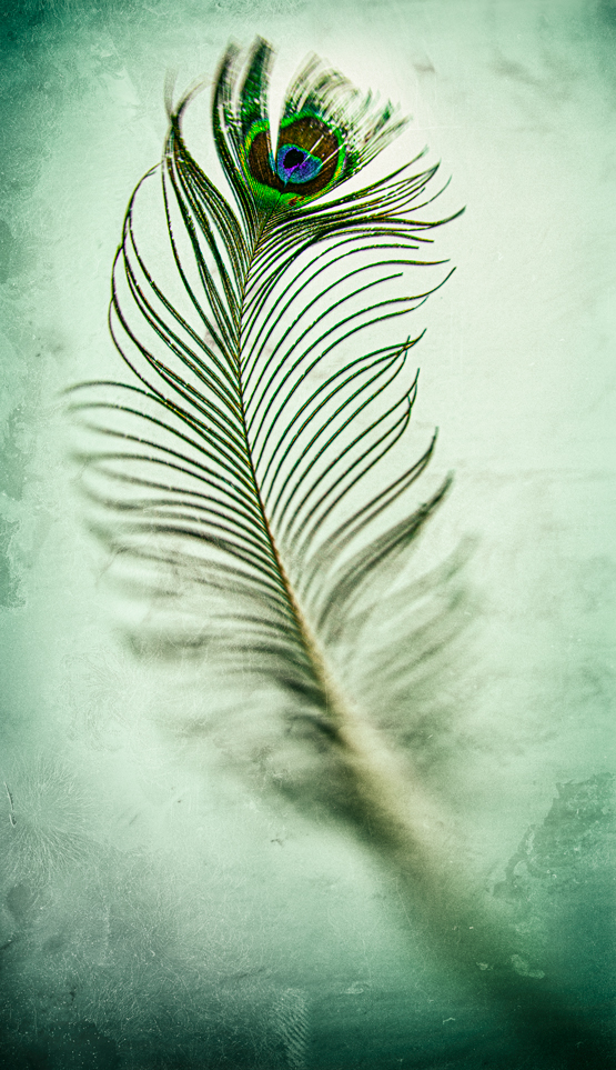 Feathers-02